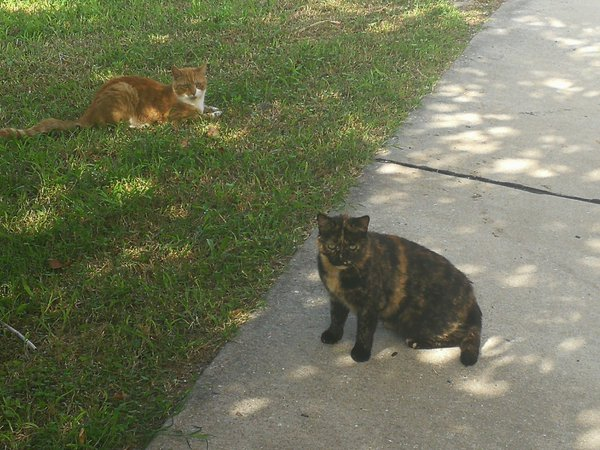 Two stray cats in Baltimore thumbnail
