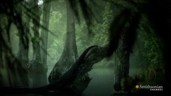 Preview thumbnail for Sneak Preview of Titanoboa: Monster Snake