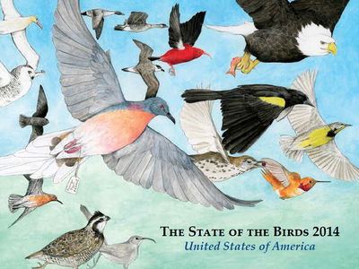 The cover of the 2014 State of the Birds 2014, the most extensive study of birds in the U.S. ever published.