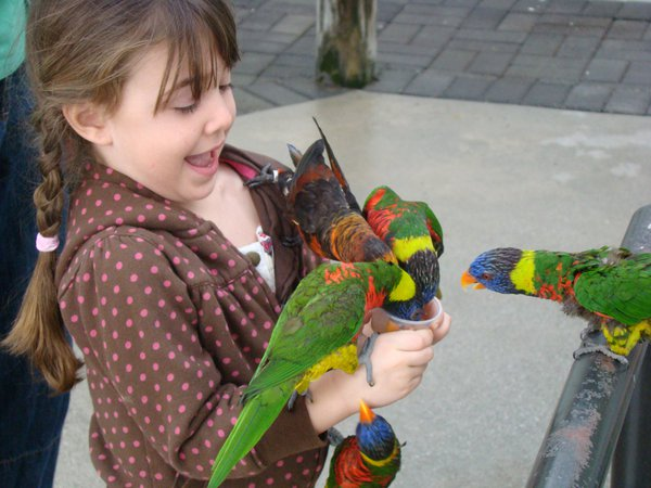 Grandniece thrilled with feeding the lorikeets thumbnail