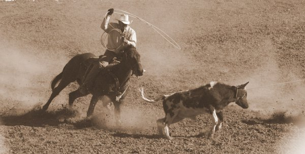 Steer Roping at the Annual Tucson Rodeo thumbnail
