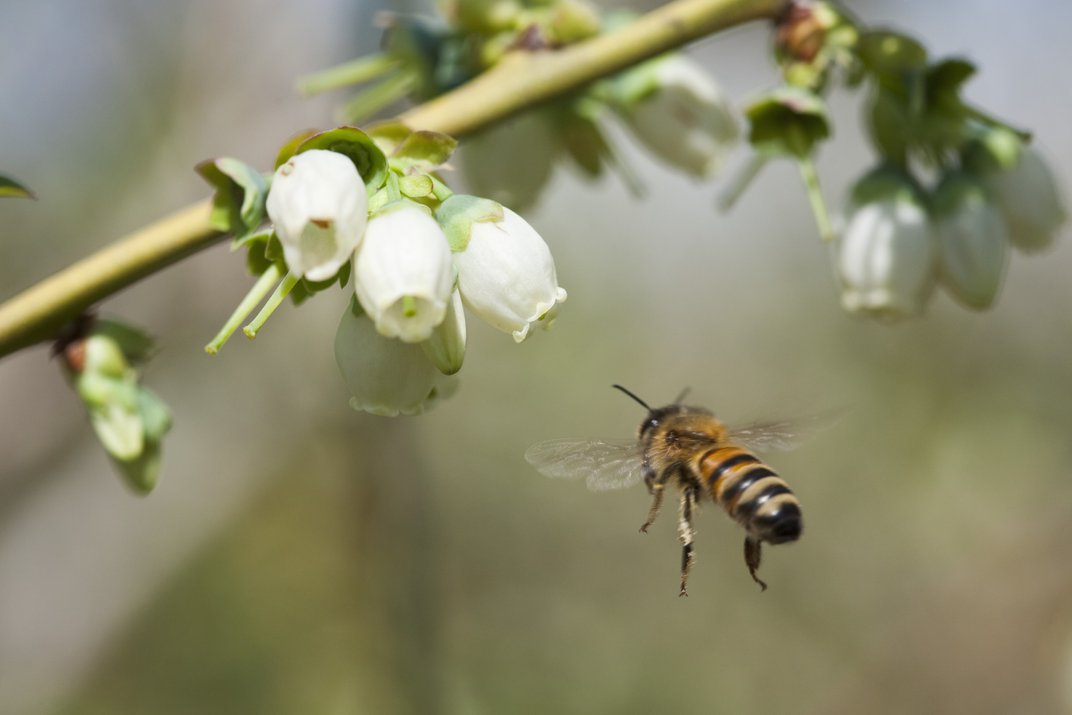 A Diversity of Bees Is Good for Farming—And Farmers' Wallets