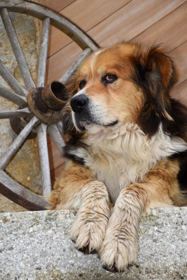 A dog at the door. thumbnail