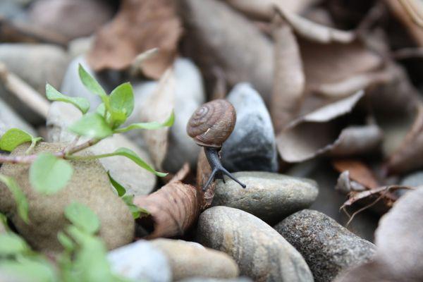 Snail Scavenge thumbnail