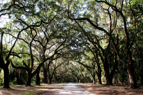 Wormsloe State Historic Site thumbnail