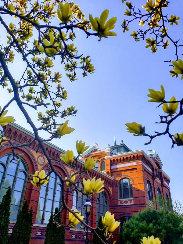 The Smithsonian Castle in the spring thumbnail