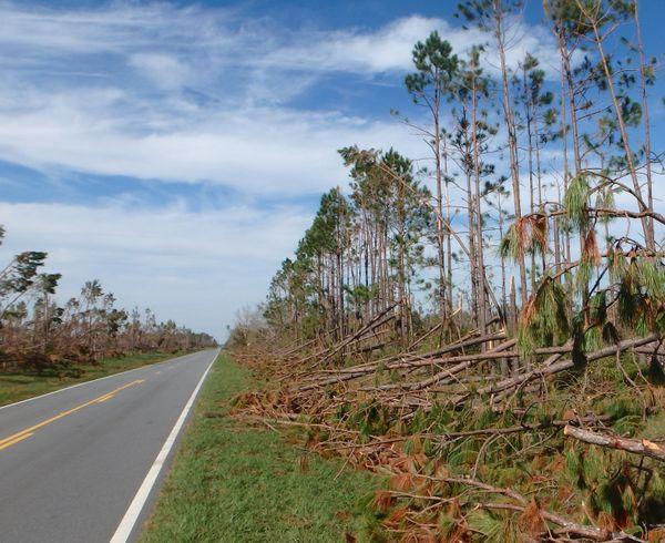 Road to Altha thumbnail