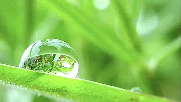 Lawn reflection thumbnail