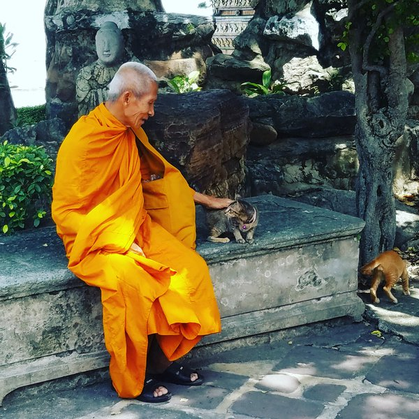 Monk petting kitten  thumbnail