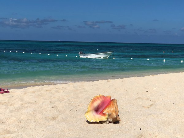 Conch Shell on the Beach with Boat in Behind thumbnail