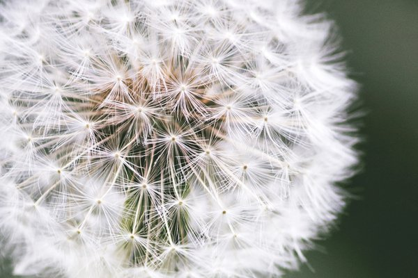 A Weed Indeed, but a Beautiful Weed thumbnail