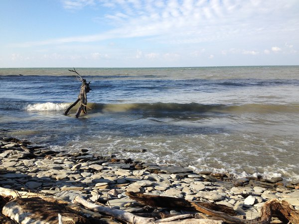 Driftwood in the waves of Lake Erie thumbnail