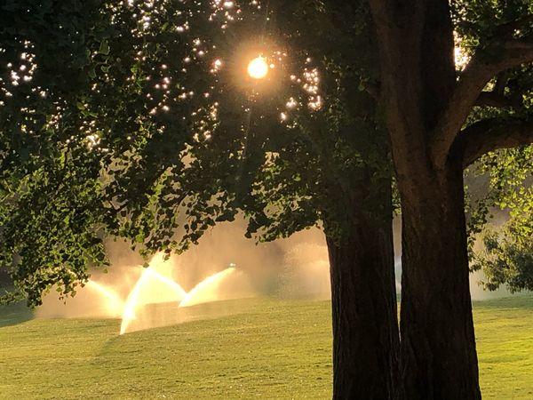 Central Park at 7:56 AM thumbnail