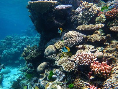 Coral reef health is an important indicator of the ocean's well-being. Scientists can study corals to learn more about how climate change is affecting the oceans.  (Wise Hok Wai Lum, CC-BY-SA-4.0)