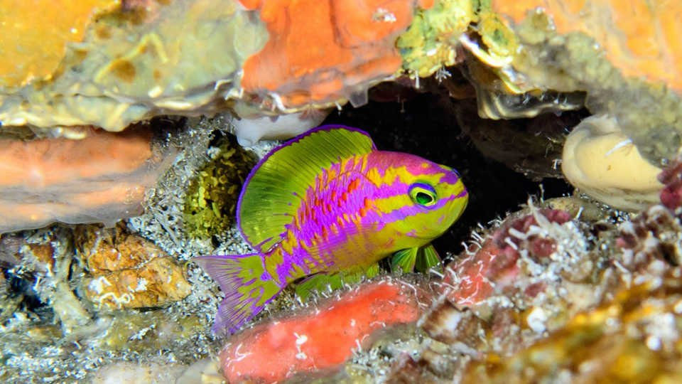 Newly Discovered Neon Fish Species Is Named After Greek Goddess of Love