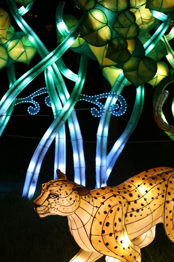 A Lantern Festival Night thumbnail