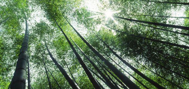 bamboo-631.jpg