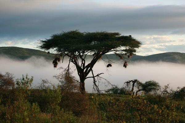 Dawn on the slopes of Ngorongoro Crater, Tanzania thumbnail