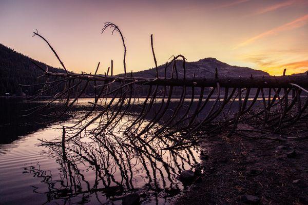 Alien Tree on Donner Lake thumbnail