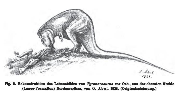 20110520083117abeltyrannosaurus1.jpg