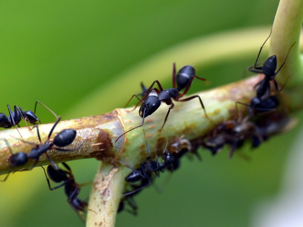 Close-up view of ants crawling along a green branch