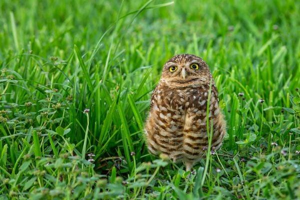 This Owl Looks Like He's Smiling thumbnail