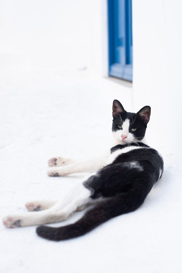 The Sexiest Cat in Mykonos thumbnail