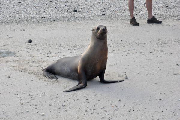 Seal posing thumbnail