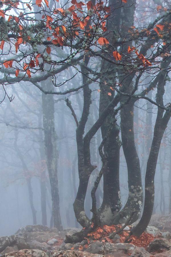Magic forest thumbnail
