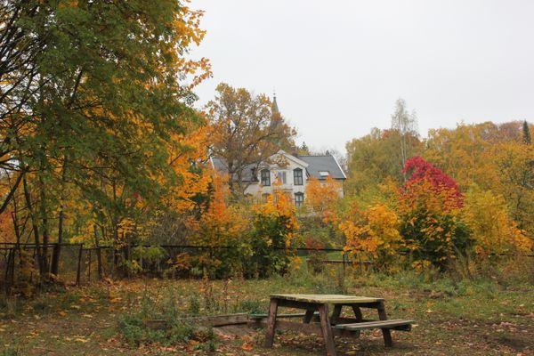 Autumn in Oslo thumbnail