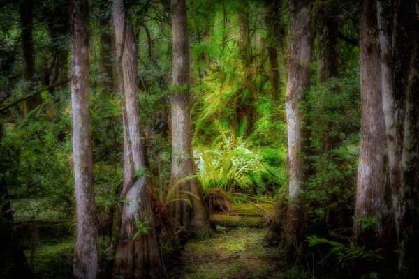 Big Cypress National Preserve thumbnail