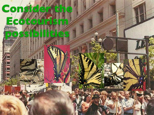 A Butterfly Species Settles in San Francisco's Market Street