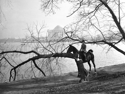 On December 10, 1941, Joy Cummings poses with one of the four cherry trees vandalized at Washington, DC's Tidal Basic.