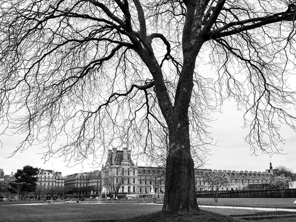 Winter at The Tuileries Garden thumbnail