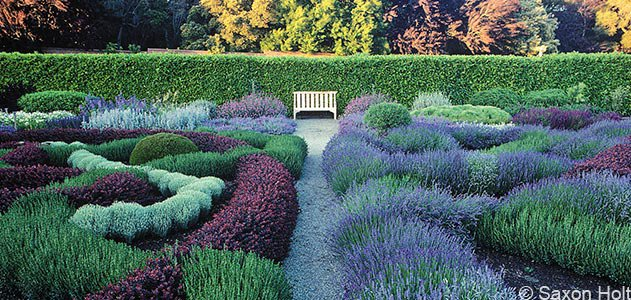 Filoli garden lavender