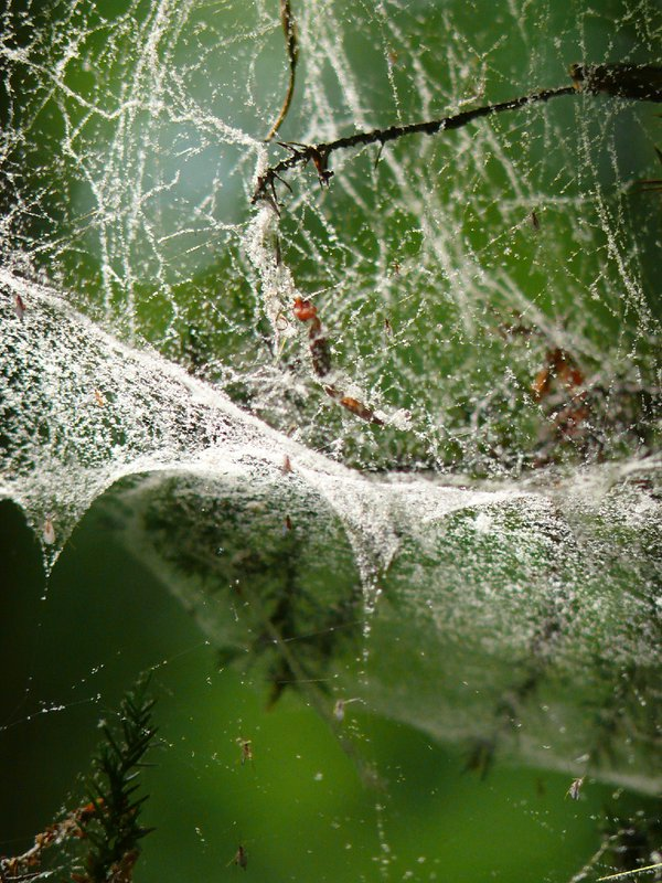 The tangled web he weaved. thumbnail