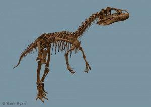 20110520083136big-al-allosaurus-laramie-300x212.jpg