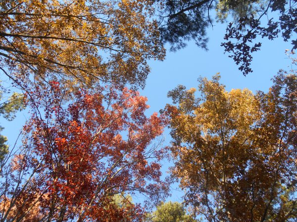 Deciduous Canopy thumbnail