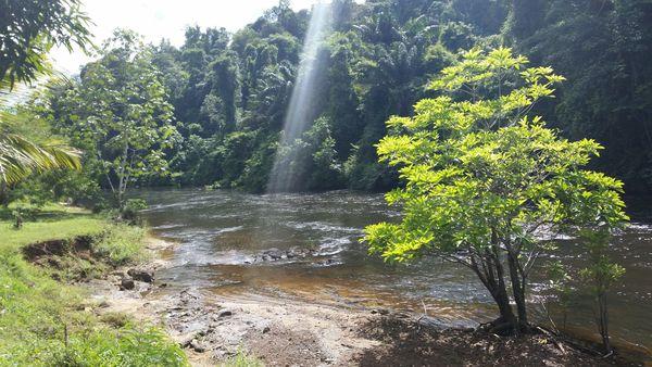 Sunburst on river in Suriname back into the rainforest thumbnail