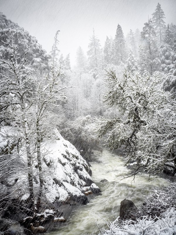 End of the snow flurries, Sutter Creek, Amador County, Calif. thumbnail