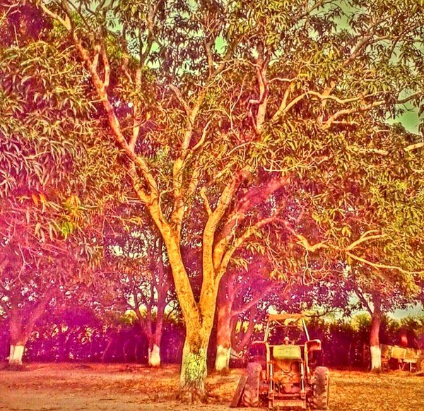 the tree and the tractor thumbnail