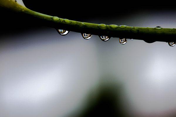 Macro Rain Drops thumbnail