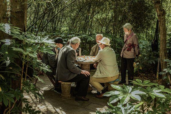 Play chess among bamboos thumbnail