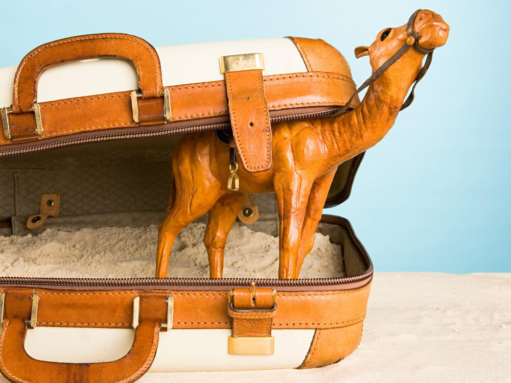 Camel in Suitcase