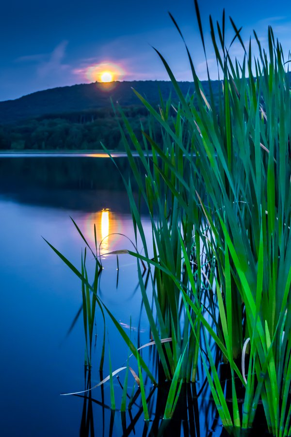 Moonlit Cattails thumbnail