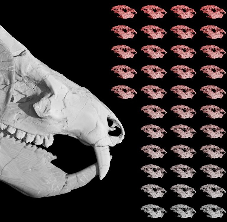 Kayentatherium