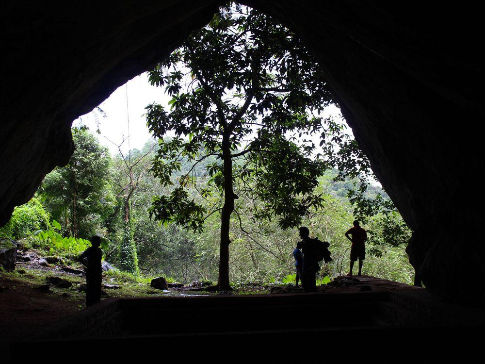 Rainforest Cave