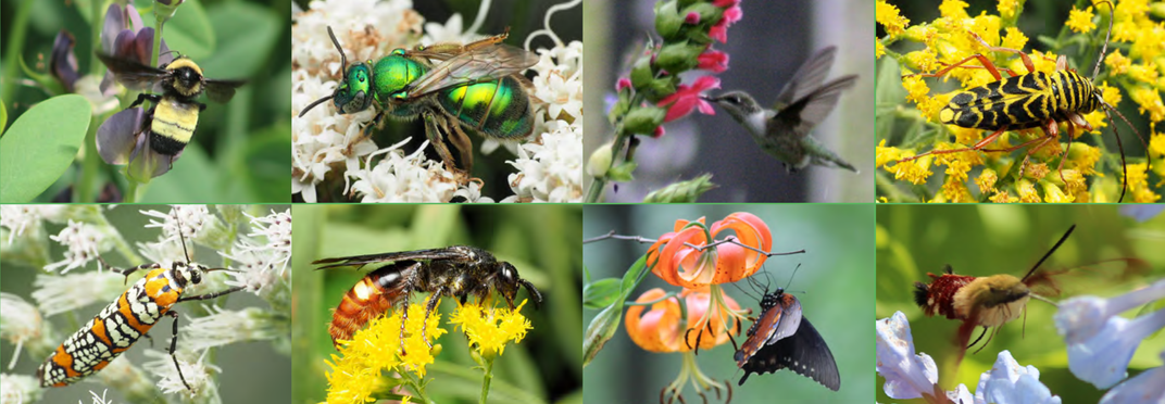 Composite of eight insects pollinating flowers