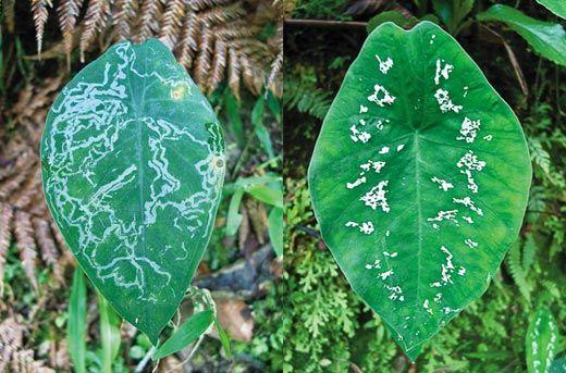 Ecuadorean rain forest plant