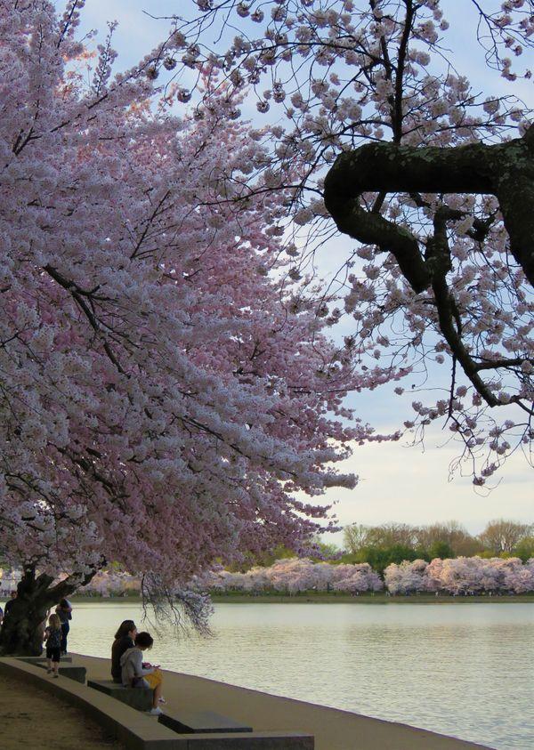 A Zen Retreat thumbnail